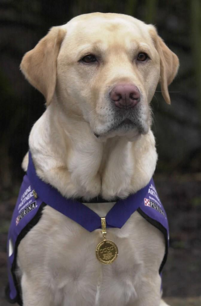Собачья медаль за отвагу