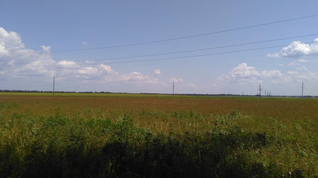 Поля Ростовской области - 2