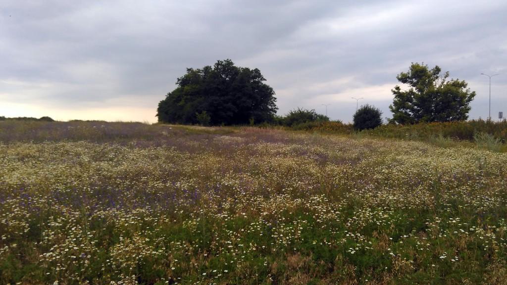 Цветущий луг возле трассы М4